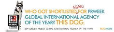 BREAKING NEWS! We're honored to be shortlisted for PRWeek's Global 2015 International Agency of the Year! Paws crossed