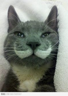 Cat with a mustache. my life is complete.