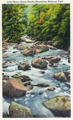 Great Smoky Mts. Nat'l Park, TN - Scenic View of Little River
