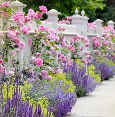 Lavender & Climbing Roses.  I love the green plant mixed in there!  So beautiful!