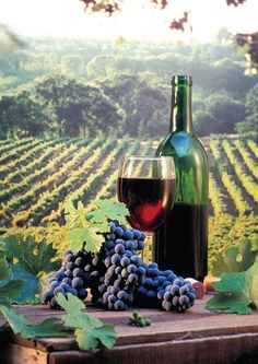 Italy In November for tasting Novello, the first wine of the year