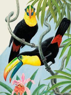 Two Toucans by Reginald B Davis at the Illustration Art Gallery illustrationartgallery.com