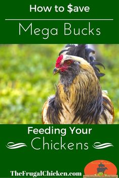 Who doesn't want to save money on chicken feed? In this session of What The Cluck?! you'll learn 8 ways to save money on chicken feed. From FrugalChicken: