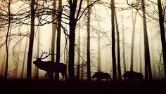 Forest, Fog, Hirsch, Wild Boars