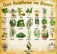 Advice on everything gardening Eco Garden, Garden Deco, Love Garden, Fruit Garden, Edible Garden, Balcony Garden, Vegetable Garden, Garden Plants, Urban Farmer
