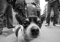 Omenatge a Elliott Erwitt Vintage Photography, Animal Photography, Street Photography, Edward Steichen, Henri Cartier Bresson, Robert Frank, Steve Mccurry, Martin Parr, Robert Doisneau