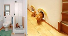 cat & human toilet and supercute mouse hole for cats