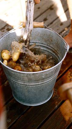 Nyplockade ny potatis..så gott..