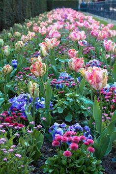 ♔audreylovesparis — Flowers in St. Germaine, Paris