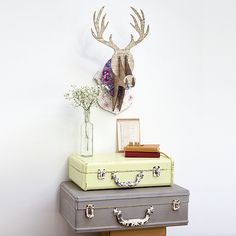 Have a go at our quirky stag headto add character to a plain wall.