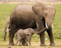 Presente da Mãe Natureza: Mamães e Seus Filhotes!