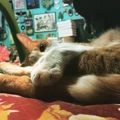 換毛期…#boriscat