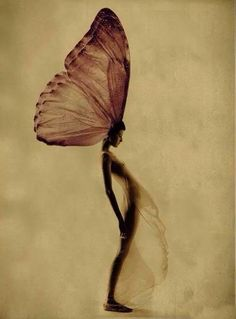 Magic is believing in yourself, if you can do that, you can make anything happen. - Johann Wolfgang von Goethe | Lady Butterfly | Very cool photo blog