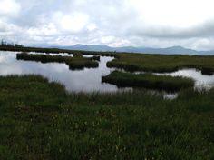Oze national park 尾瀬国立公園、アヤメ平