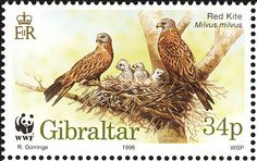 Red Kite stamps - mainly images - gallery format