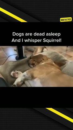 Cute Baby Dogs, Cute Funny Dogs, Funny Cats And Dogs, Cute Funny Animals, Cute Baby Animals, Cute Puppies, Funny Animal Jokes, Funny Dog Memes, Really Funny Memes