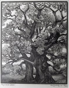 Wood engraving by Alec Buckels of 'Haywood oaks' 1931, via Etchings Plus