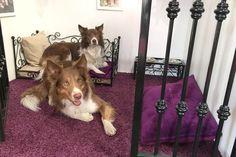 Pokoj v hotelu pro psy VIP Pets