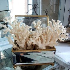 For the Love of Coral; DIY Designs You Could Do Yourself! from the lovely beautifullycoastal.com