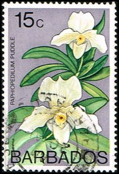 Barbados 404 Stamp Lady Slipper Orchid