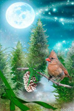 Птичка в зимнюю ночь - анимация на телефон №1349667