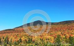 Photo about A view of the majestic Mount Abraham in Lincoln Vermont in Autumn with brilliant leaf colors climbing the mountain. Image of leaf, mountain, majestic - 79415859 Leaf Images, Leaf Coloring, Vermont, Abraham Lincoln, Leaves, Autumn, Seasons, Stock Photos, Fall Season