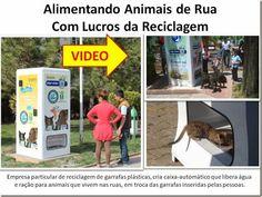 Mural Animal: Alimentando Animais de Rua Com Lucros da Reciclage...