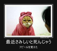 最近さみしいと死んじゃう アピールを覚えた #猫 #アピール #さみしい | Flickr - Photo Sharing!