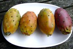 Potencjał zdrowotny opuncji figowej