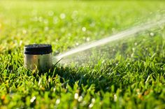 Watering your plants can be a struggle if you live in an area that is susceptible to drought. Sprinklers can use a lot of water, especially if you frequently forget to turn them off.