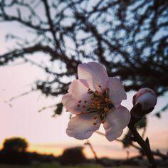 Paseando... Disfrutando... Desconectando... by rose_violet_