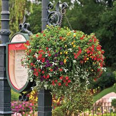 Beautiful Baskets - Spectacular Container Gardening Ideas - Southern Living
