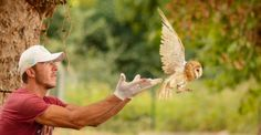 Sevimli Yavru baykuşlar doğaya salındı