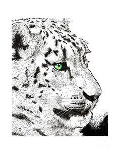 Snow Leopard Paul Kmiotek