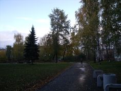 El camí ple de fulles