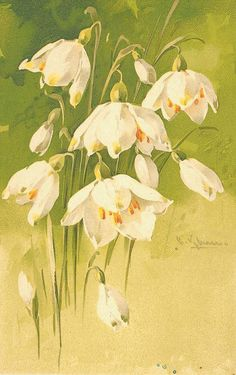 Beautiful white flowers ~ by Catherine Klein