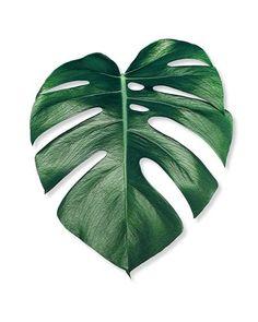 fleur monstera leaf bundle wayfair going green pinterest porzellan bemalen wohnen und. Black Bedroom Furniture Sets. Home Design Ideas