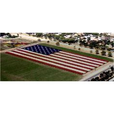 Floral Flag in Lompoc, CA - acres. Each star of White Larkspur is in diameter. Each stripe is wide. The flag contains more than Larkspur plants with flower stems each for a total of more than 2 million flowers. Larkspur Flower, Million Flowers, All Flowers, Beautiful Flowers, American Spirit, American Flag, American Symbols, American Pride