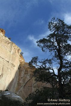 La Ventana Arch and Pinon Pine, El Malpais National Monument, New Mexico. IMG_C_21571 by The Bright Edge - Photography by Anne Slattery, via Flickr
