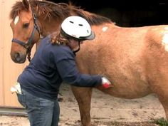 How to take care of your horse