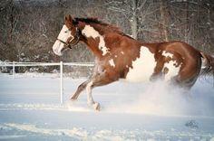 APHA winter wonder land