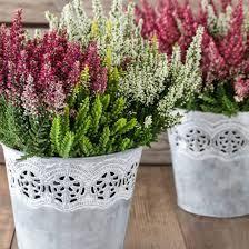 Bildergebnis für pflanzen winter balkon