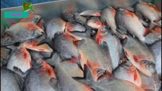 New Biggest Fish Market In BD   Wondrous Fish Market In Dhaka, Baipail