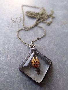 Ladybug necklace. Dead orange real ladybug by IsThisHandmade