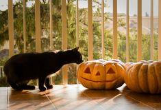 Every day is Halloween : Photo