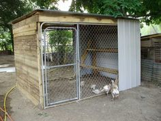 Chain link dog kennel converted to a chicken coop.