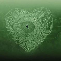 Hearts in spider webs | Dominique-Piccinato-photo-design-Dominique-Piccinato-Photography-Love ...