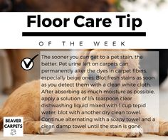 floor care #tip of the day.