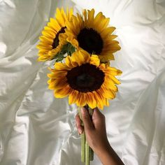 """ccrygirl: """" the sunflower is mine, in a way -van gogh """" Yellow Cloud, Pastel Yellow, Mellow Yellow, All Flowers, Pretty Flowers, Sunflower Wallpaper, Sunflower Flower, Summer Aesthetic, Happy Colors"""