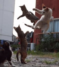 Everybody was #Cat-Fu fighting! (45 photos of the month) #Aww #Cute #fight #cats #kitty